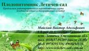 Саженцы,  саджанці,  Плодопитомник  Летичев-сад