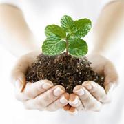 Средства защиты растений (пестициды) оптом,  гербициды,  фунгициды