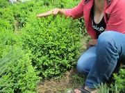 Декоративні рослини для хмельничан