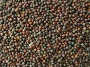 Масличные и Зернобовые