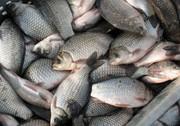 продам рыбу жывую або сушоную