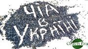 Семена ЧИА Староконстантинов, Хмельницкий