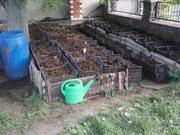 Производство органического удобрения  Калифорнийскими червями